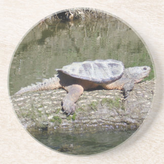 Snapping Turtle Coaster