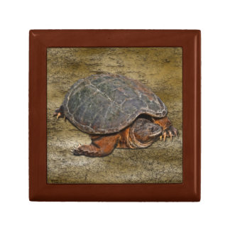 Snapping Turtle Terrapin-lover Gift Gift Box