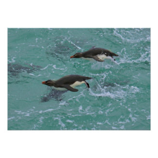 Snares Penguins Swimming Poster
