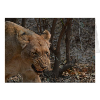 Snarling Lioness Card