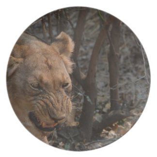 Snarling Lioness Plate