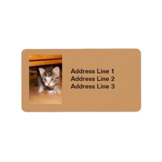 Sneaking Kitten Label