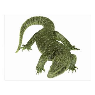 Sneaky Galapagos Iguana Postcard