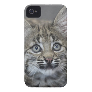 Sneaky Kitten iPhone 4 Case-Mate Cases