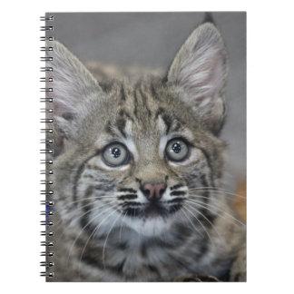 Sneaky Kitten Note Book