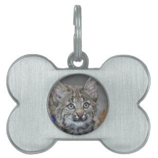 Sneaky Kitten Pet ID Tags