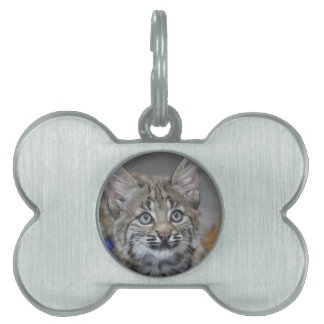 Sneaky Kitten Pet Name Tag