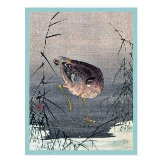 Snipe bird in reeds by Ohara, Koson Ukiyoe Postcard