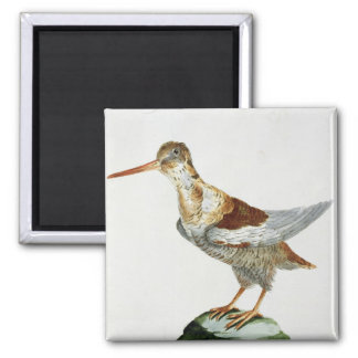 Snipe, c.1767-76 (hand coloured engraving) square magnet