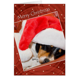 Snoozing Dog In Santa Hat Christmas Card