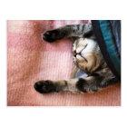Snoozing Kitten Postcard