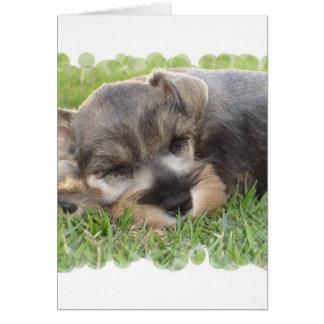 Snoozing Schnauzer Greeting Card