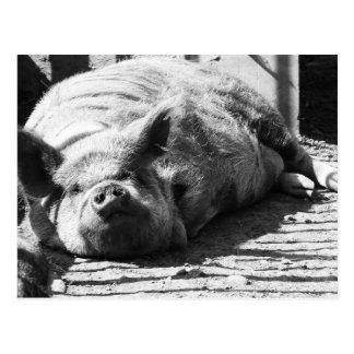 Snoozy piggy 2 postcard