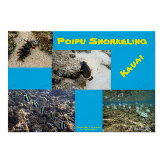 Snorkel Poipu Poster