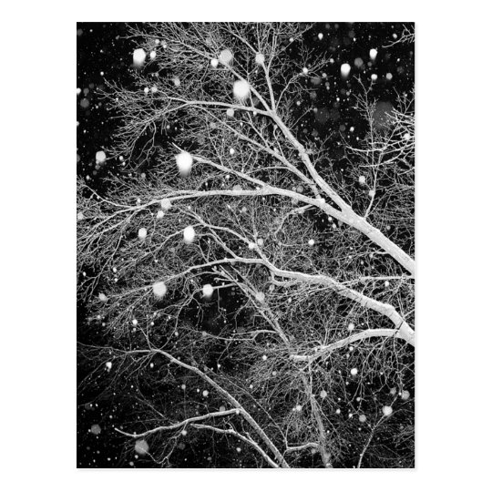 Snow Among Branches Postcard