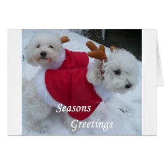 Snow Babys Card
