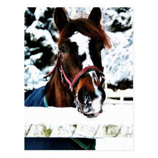 Snow Beauty Postcard