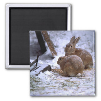 Snow bunnies magnet