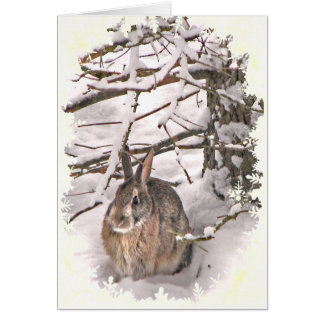 Snow Bunny Valentine Greeting Card