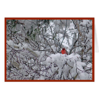 Snow Cardinal 6211-2 Christmas Card