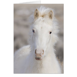 Snow Colt Wild Horse Greeting Card