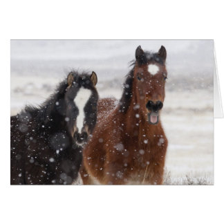 Snow Colts Wild Horse Greeting Card