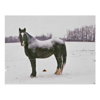 Snow covered Amish Draft Horse-Postcard Postcard