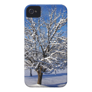 Snow covered Apple tree iPhone 4 Case-Mate Case