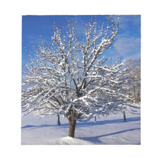 Snow covered Apple tree Notepad