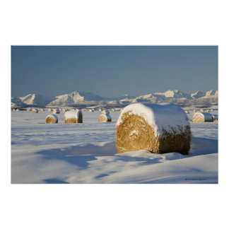 Snow-Covered Hay Bales Poster