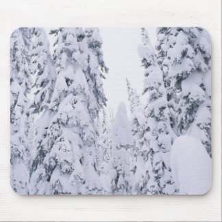 Snow-covered lodge pole pines mouse pad