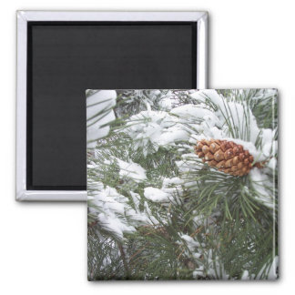 Snow covered pine cone. magnet