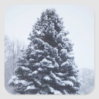 Snow Covered Pine Tree Sheet 20 Square Stickers