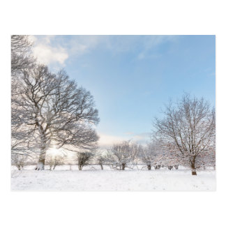 Snow covered tree line with early morning sunrise postcard