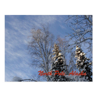 Snow Covered Trees from North Pole, Alaska Postcard