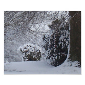 Snow covered trees art photo