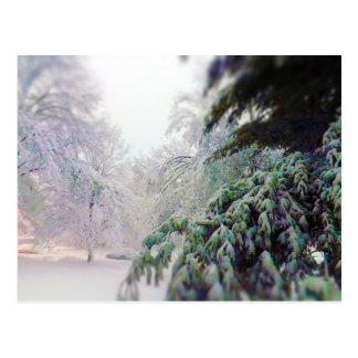 Snow Covered Trees, Pine on KC Street Postcard