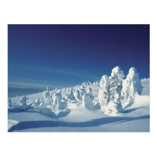 Snow-Covered Trees Postcard