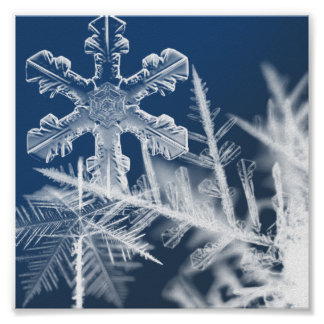 snow crystals poster