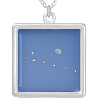 Snow geese and Canadian geese take flight at Silver Plated Necklace