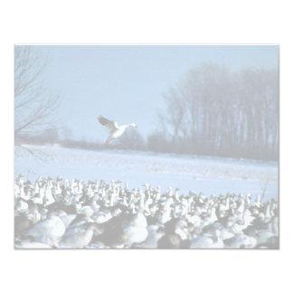 Snow Geese Card