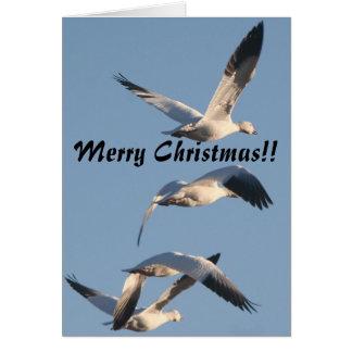 Snow Geese Christmas Card