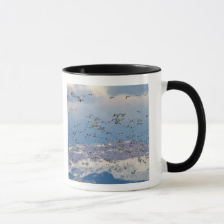 Snow geese during spring migration 2 mug