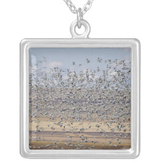 Snow geese during spring migration 3 silver plated necklace