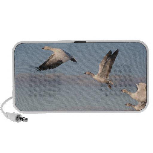 Snow Geese Flying OrigAudio Doodle Speaker