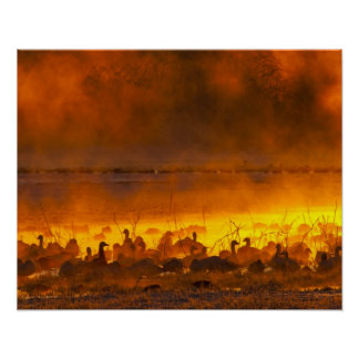 Snow geese in foggy sunrise poster