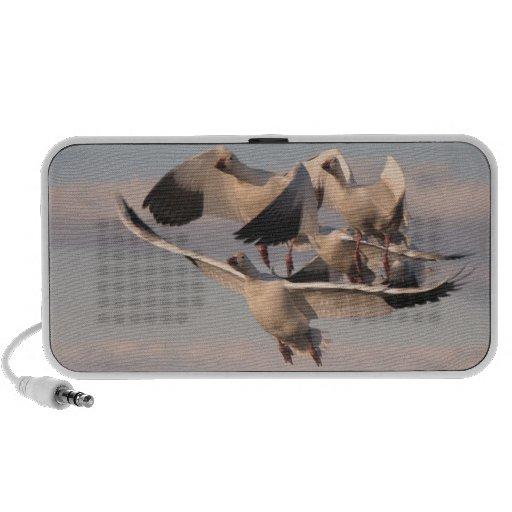 Snow Geese OrigAudio Doodle Speaker