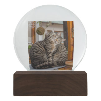 Snow Globe with Two Cats Image