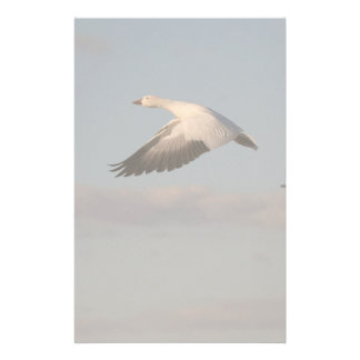 Snow Goose Flying Stationery