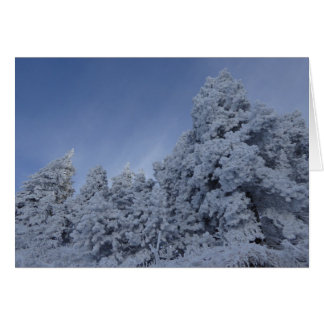 Snow in Trees Frost Winter Blank Greeting Card